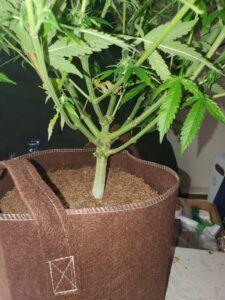 Training-Cannabis